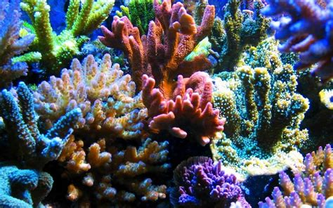 Coral Reef L by Beautiful Coral Reefs The Sea Of Binh Thuan