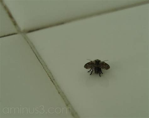 Flies In Bathroom by Bathroom Fly Animal Insect Photos Icapture Ronald S