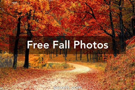 free photos fall pictures 183 pexels 183 free stock photos