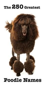 popular poodle names poodle names 28 images 10 best poodle names poodle