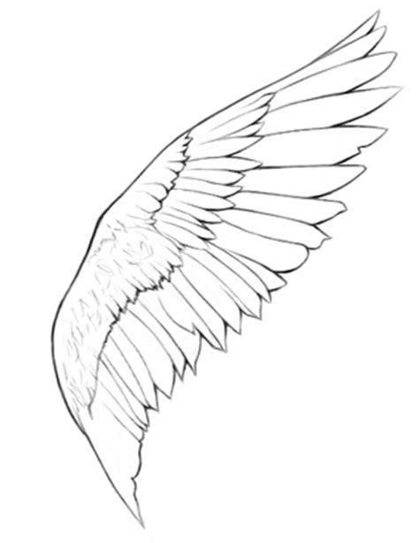 Bird Wings Outline by How To Draw Wings