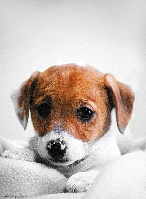 sad puppys sad puppy