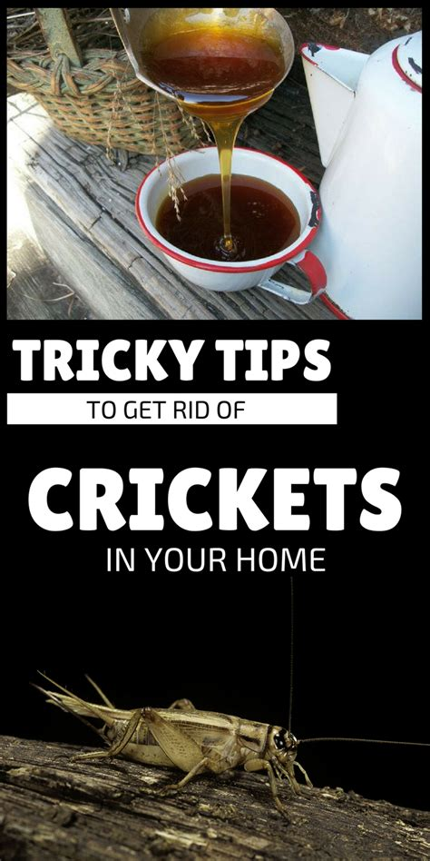 how to get rid of crickets in house how to get rid of crickets in house 28 images 10