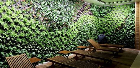 the best plants for the creation of vertical gardens