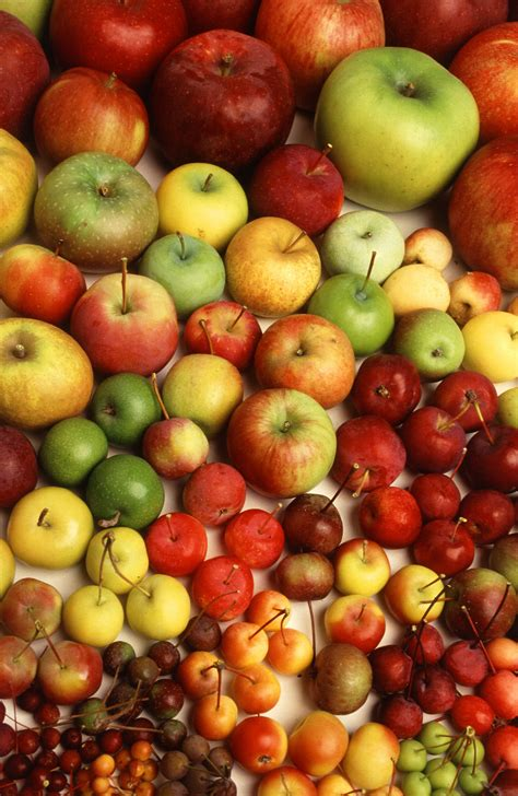 apple varieties file many different types of apples 001 jpg the work of