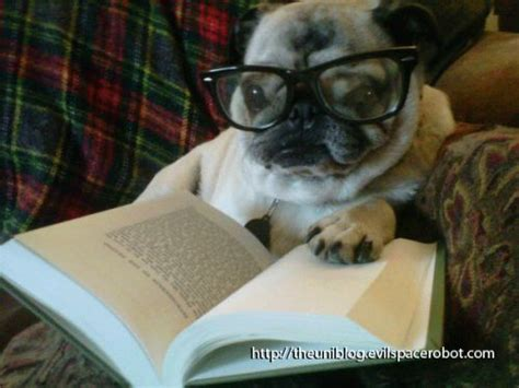 book of pugs reading is fundamental even for a pug books books and more books