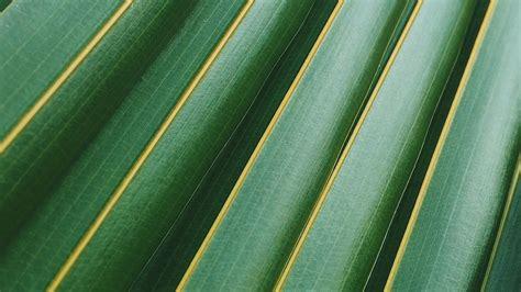 wallpaper  desktop laptop vq leaf green