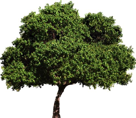 trees for revitcity rendering trees in revit 2010