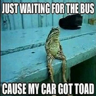 Sitting Frog Meme - waiting meme bus toad memes comics pinterest