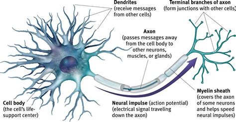 motor nerone disease motor neuron disease neurological issues herbal care