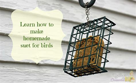 diy make your own bird feeders
