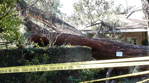 pine tree falls on house best house design tree falls on