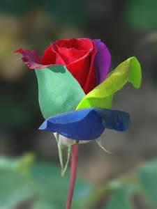 Multi Colored Flowers - yedi renkli g 252 l