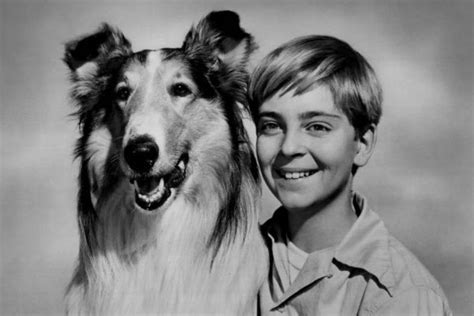 what type of is lassie collie for sale lassie and the birth of modern marketing american kennel club