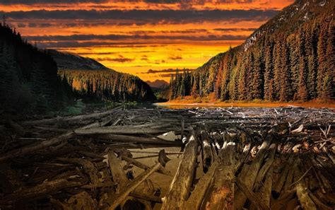 woods sunset wallpaper forest sunset wood river wallpapers forest sunset wood