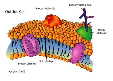 biology  home page