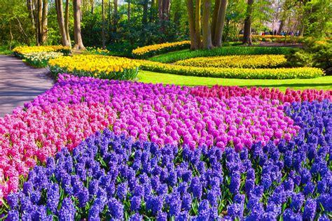 giardini di keukenhof olanda i tulipani ed il parco di keukenhof caldana
