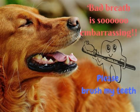 bad breath in dogs bad breath in dogs caring for a senior