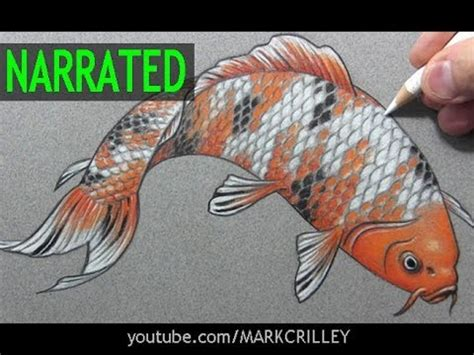 koi pond thediabeticspoon drawing realistic and stylish how to draw a fish quot koi quot narrated step by step youtube