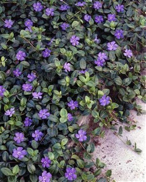 best 25 ground cover shade ideas on pinterest ground