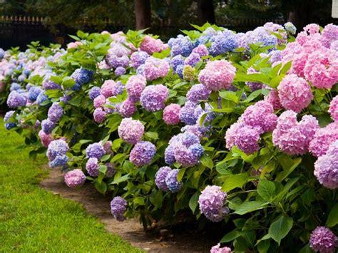 jardines con flores 50 fotos de ideas para decorar plantas de sombra 9 opciones para el jard 237 n