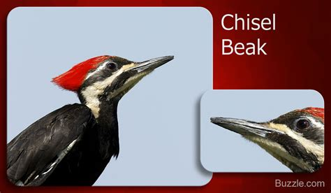 what do cracker beak birds eat different types of bird beaks you ll be amazed by the variety
