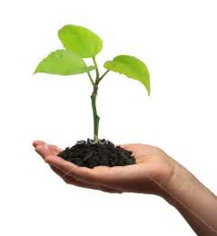 nikki s blog education is like a growing plant