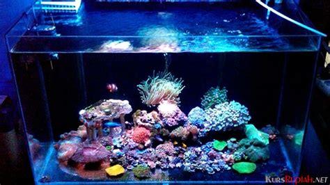 Lu Led Untuk Aquarium harga lebih mahal dari neon lu led kini banyak dipakai untuk aquarium kurs rupiah
