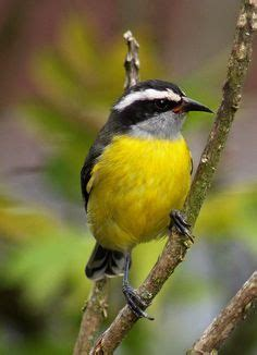 Us Islands Search Us Islands National Bird Flower Search Tropcal Flowers