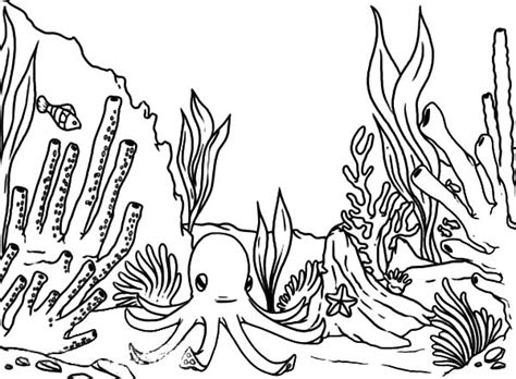 ocean plants coloring pages coloring for kids ocean plants