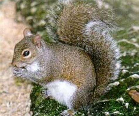 imagenes animales que respiran por los pulmones animaliitos clasificaci 211 n de los animales seg 218 n su h 193 bitat