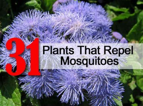 plants that repel mosquitoes 31 plants that repel mosquitoes realfarmacy com