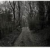 Photo Gratuite Effrayant Paysages Sombre Magie  Image