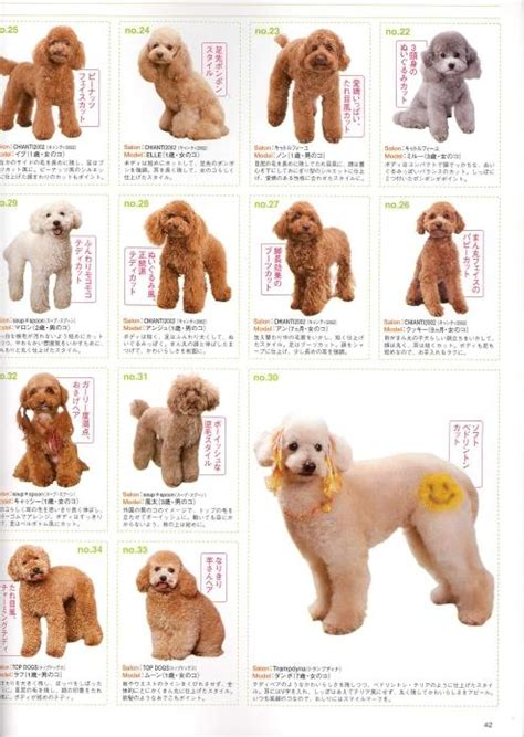what are yhe different kinds of poodle cuts poodle grooming styles