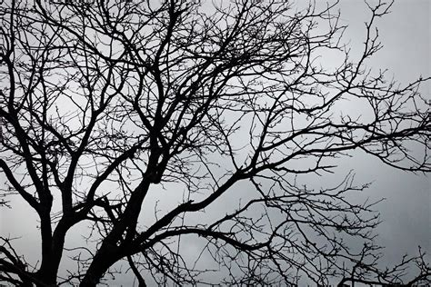black and white tree backgrounds www imgkid com the