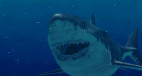 evidence of a 50 ton megalodon shark week discovery image gallery megalodon videos