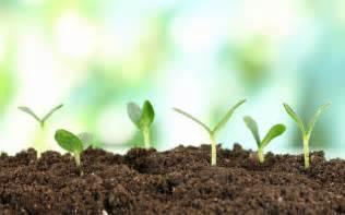 garten neu bepflanzen growing seeds new plant wallpaper for desktop mobile