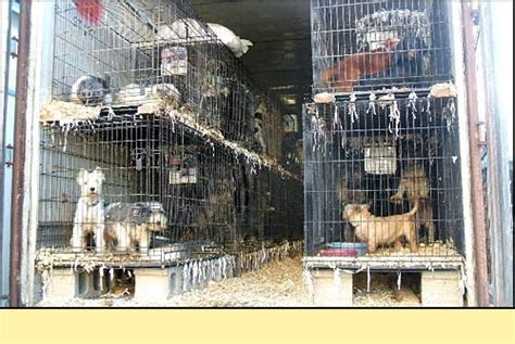 missouri puppy mills 1000 images about puppy mill hell on shelters pets and puppys