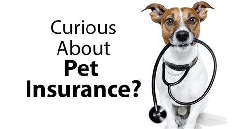 insurance for dogs the about pet insurance benadryl for dogs