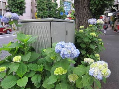Landscape Ideas To Hide Electrical Box Fence Utility Box Cover Fence Free Engine Image For User