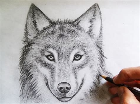 Drawing Wolf by Wolf Drawings Search Wolf