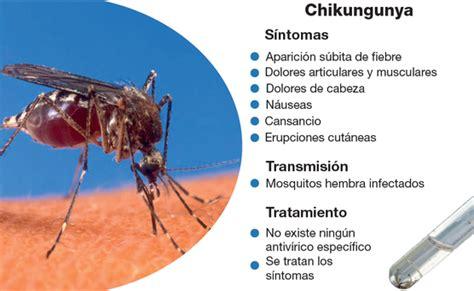 imagenes groseras sobre el chikungunya operativo federal contra dengue y chikungunya en guerrero