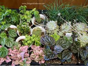 mini plants miniature gardening town and country nurseries