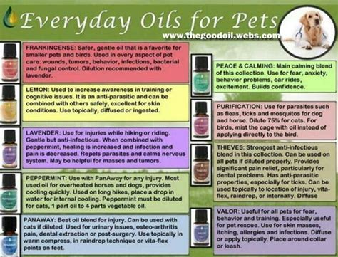 safe to 30 essential puree recipes for everyday books pin by ashleigh o donnell on oils for dogs