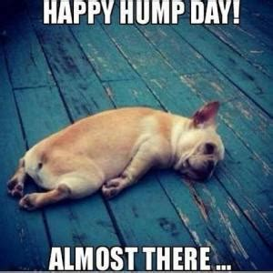 hump day memes 37 happy hump day meme graphics gifs pictures picsmine