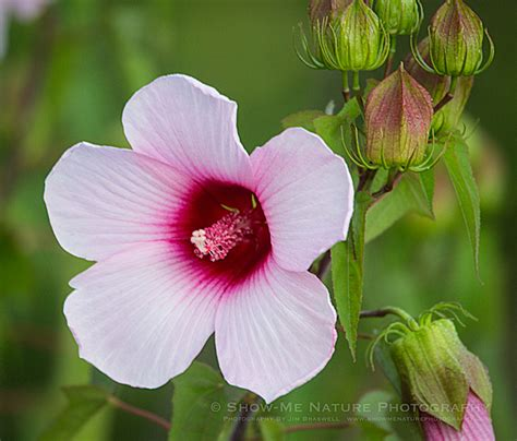 Buy 3 Get 5 3 Marsh Mallow Iii 60ml 3mg 6mg Liquid Ejm marsh mallow show me nature photography