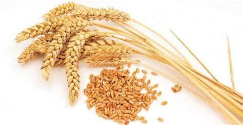 glutine negli alimenti alimentazione salute