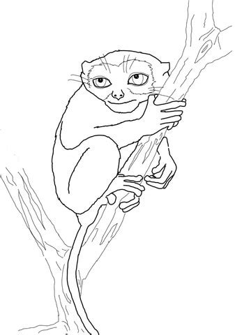 philippine tarsier coloring page  printable coloring