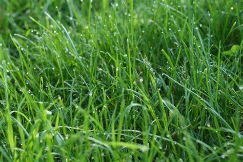 the best grass to establish a lawn in richmond va lawnstarter
