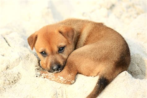 pictures of baby puppies file puppy on halong bay jpg wikimedia commons